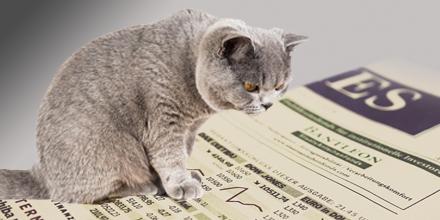 cat reading interactive stock charts